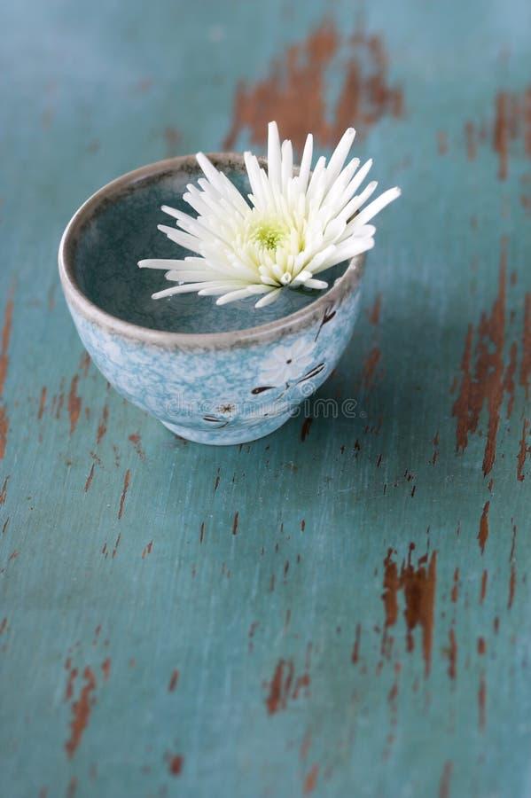 杯子花小的白色 免版税库存照片