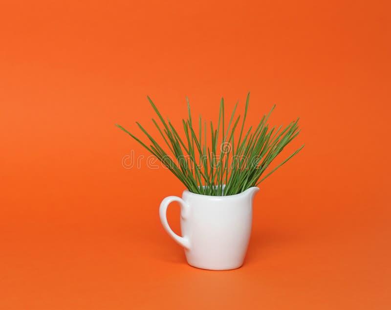 杯子souce wheatgrass 免版税库存图片