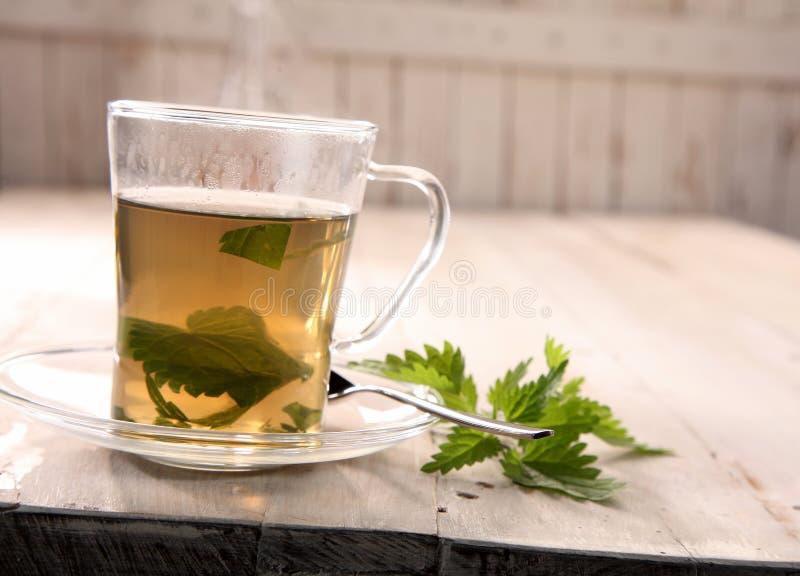 杯新鲜的刺人的荨麻茶 库存照片