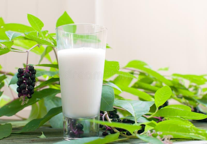 杯素食主义者牛奶 库存图片