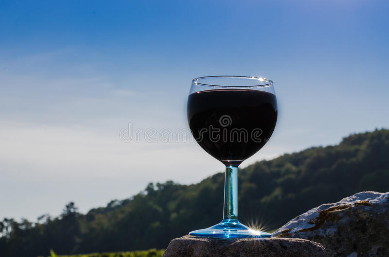 杯红色藤,伯根地,法国 免版税库存图片