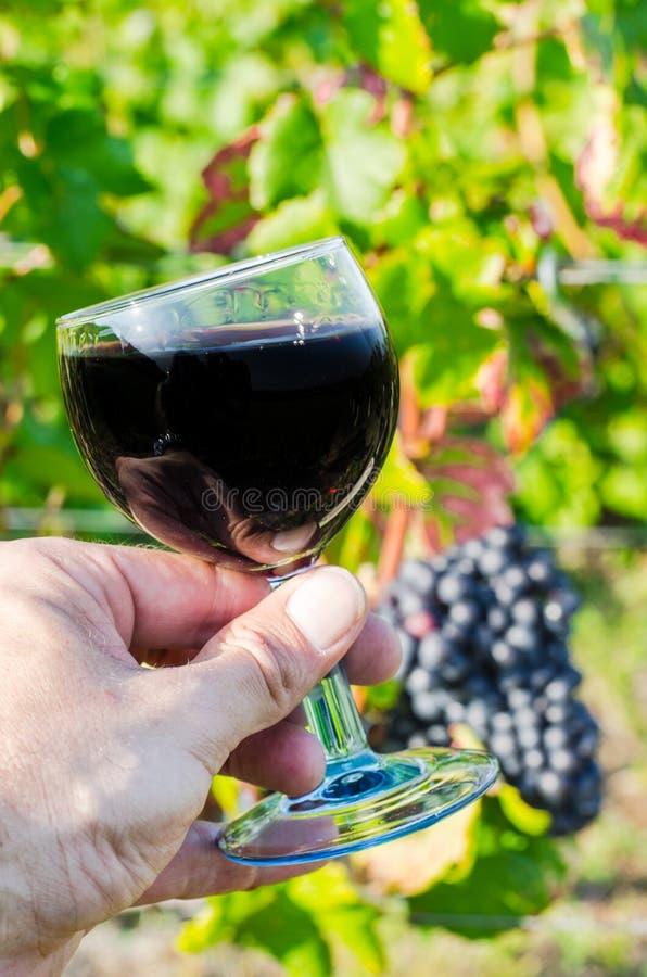 杯红色藤,伯根地,法国 免版税库存照片