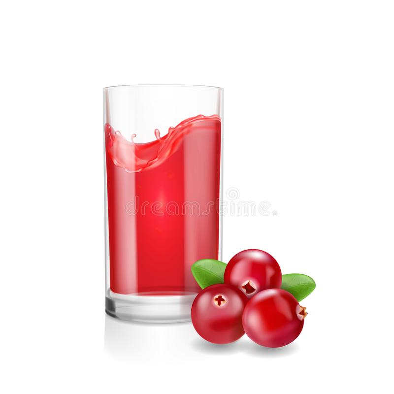 杯蔓越橘汁用现实蔓越桔 背景查出的白色 库存例证