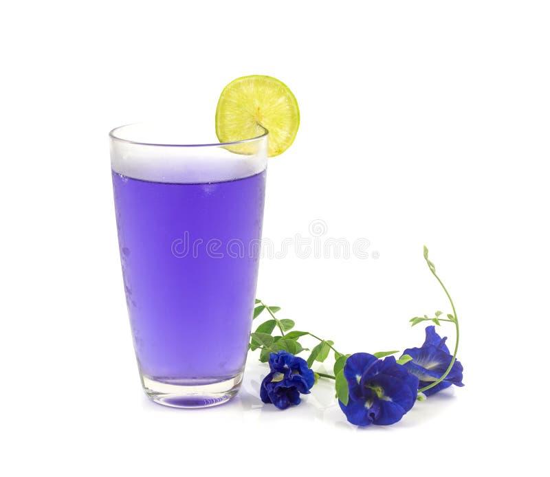 杯蝴蝶豌豆在白色背景的花汁液 免版税库存图片
