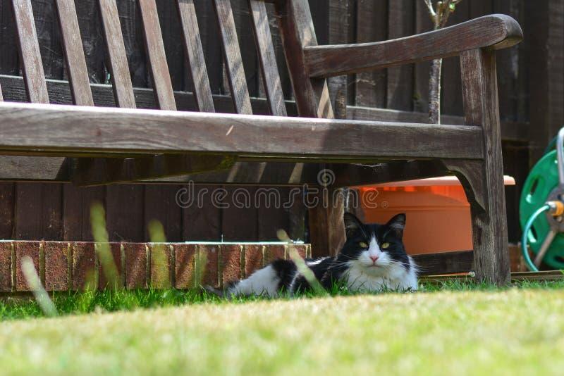 杰克休息在长凳下的猫 免版税库存照片