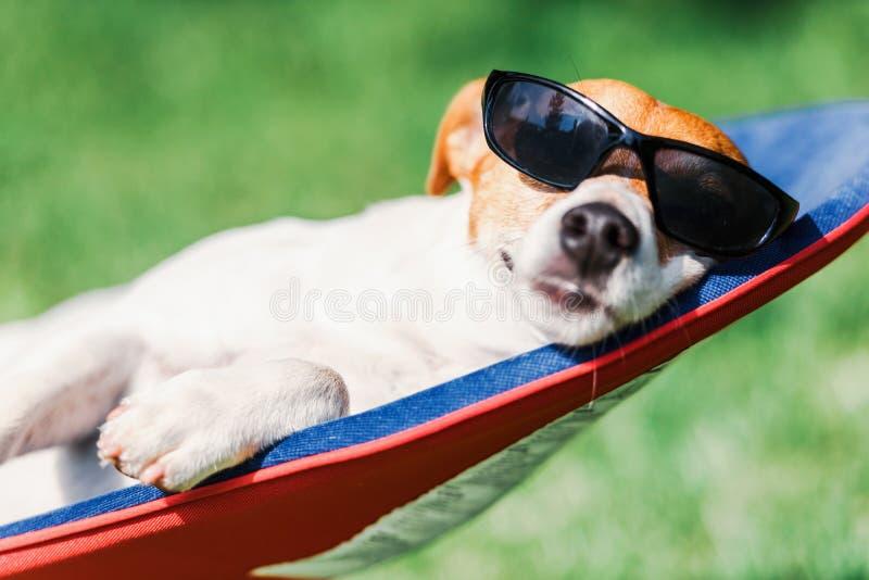 杰克罗素狗狗在甲板椅子说谎 免版税库存图片