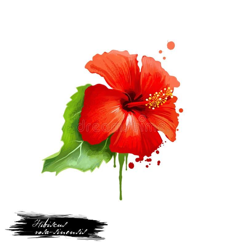 杰巴阿-与在白色隔绝的文本的木槿罗莎sinensis ayurvedic草本数字艺术例证 健康有机温泉植物 皇族释放例证
