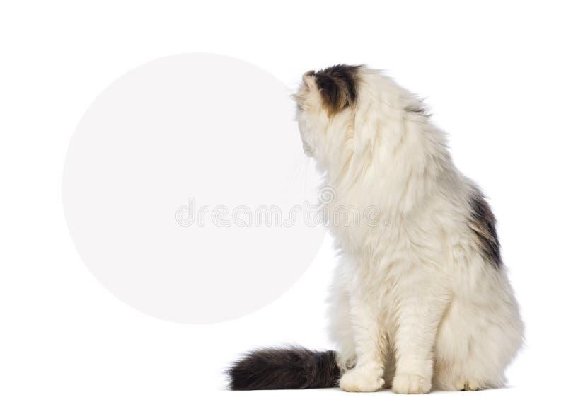 Download 松劲和注视着一个空白的标志的美国卷毛 库存照片. 图片 包括有 宠物, 空白, 人们, 钞票, 查出, 射击 - 30337570