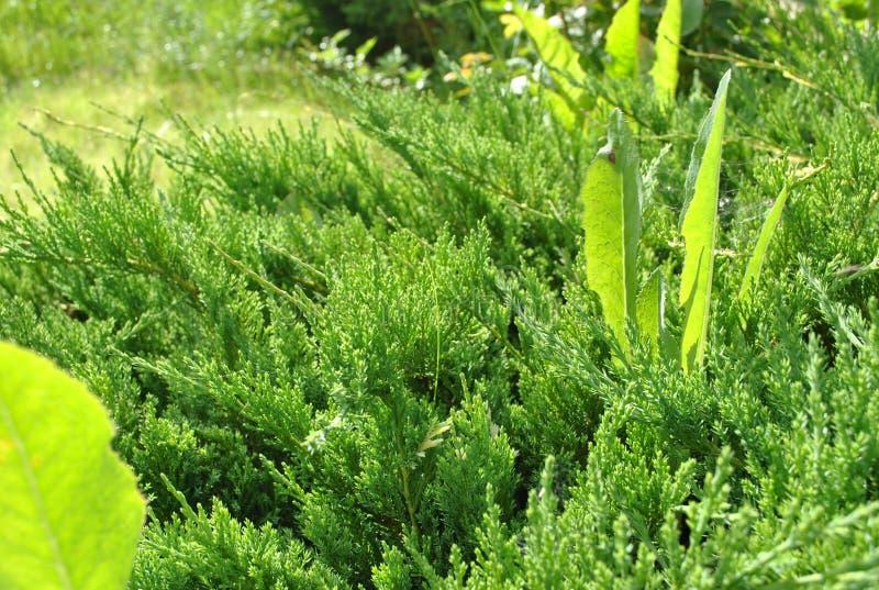 松弛绿色夏天风景在村庄 图库摄影