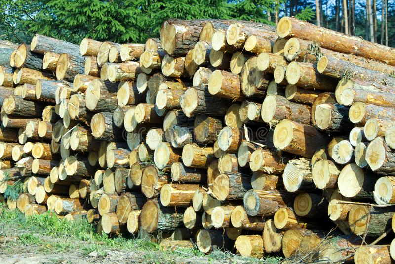 松木木日志在森林新近地切好的树日志的加起在彼此顶部在堆 库存照片