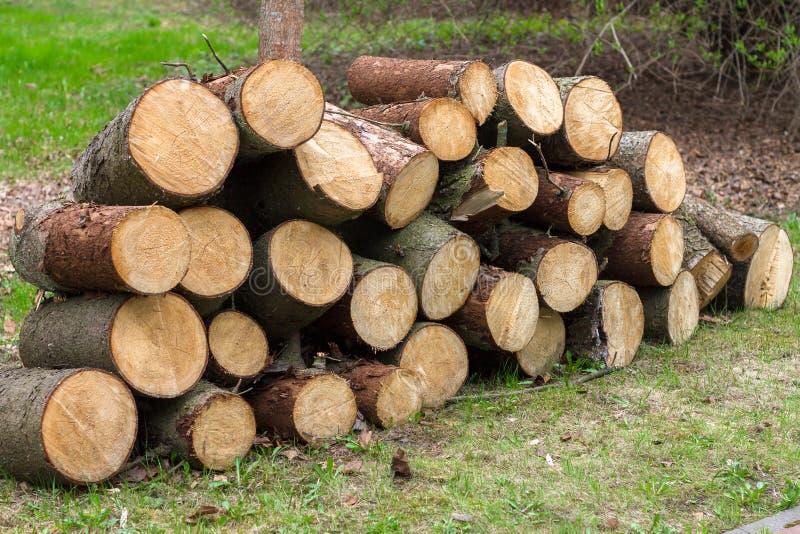 松木木日志在森林里,堆积在堆 库存图片