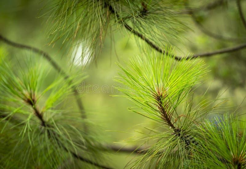 松林细节 库存图片