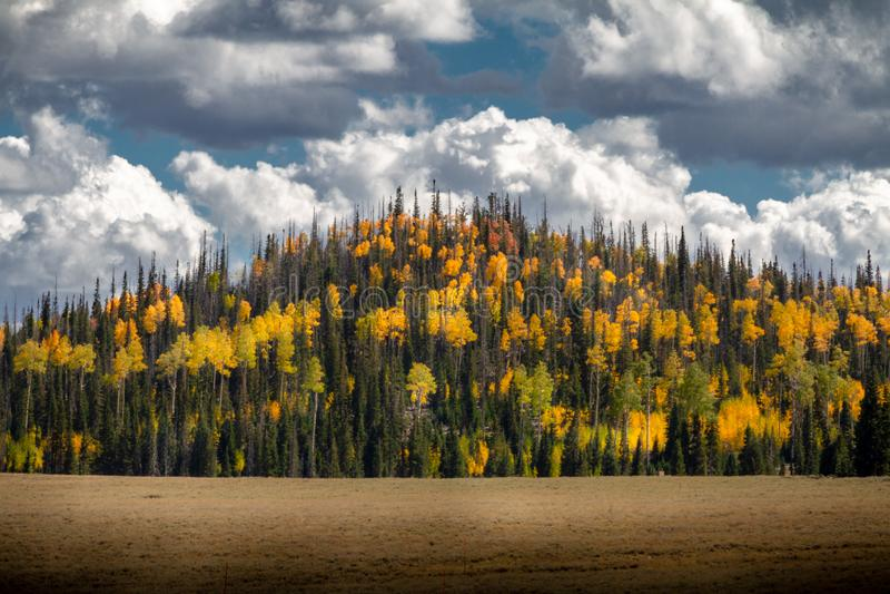 松树令人惊讶的山和桦树和亚斯本树的豪华的秋天颜色在一阴天在迪克西全国福雷斯特 免版税库存图片