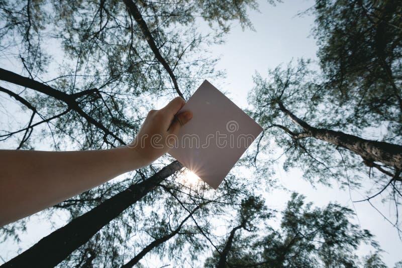 松树林背景妇女手持白纸的低视角 免版税图库摄影