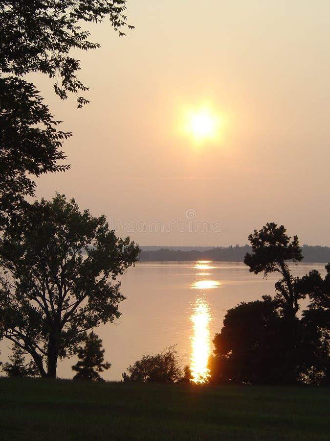 松树般茂盛的日落森林 免版税库存图片
