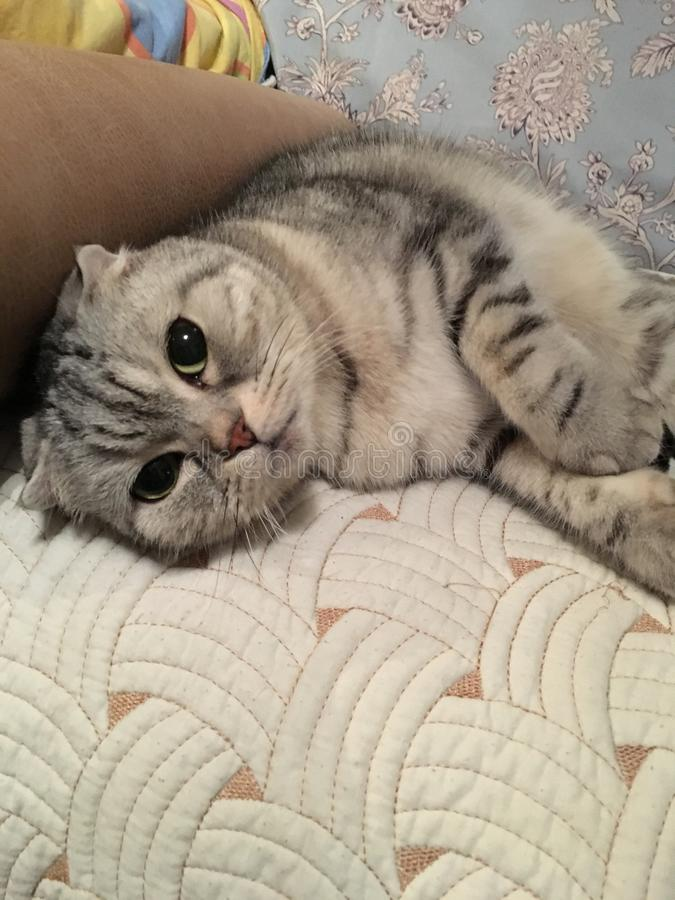 轻松的猫 免版税图库摄影