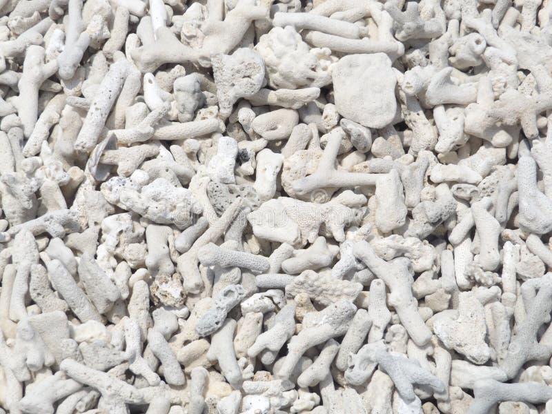 极为相象的死的珊瑚 库存照片
