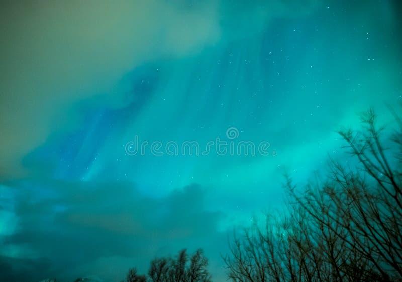 极光叫作酷寒北风光的Borealis使用与在Lofoten海岛的生动的颜色在挪威 库存图片