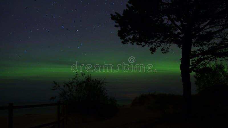 极光borealis极光和树 图库摄影
