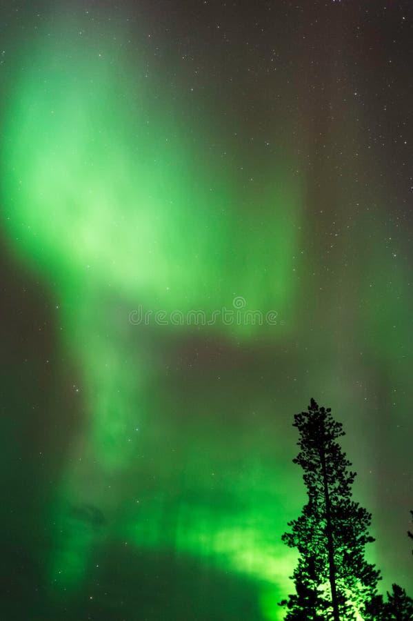 极光Borealis,北极光,在北方森林上 库存照片
