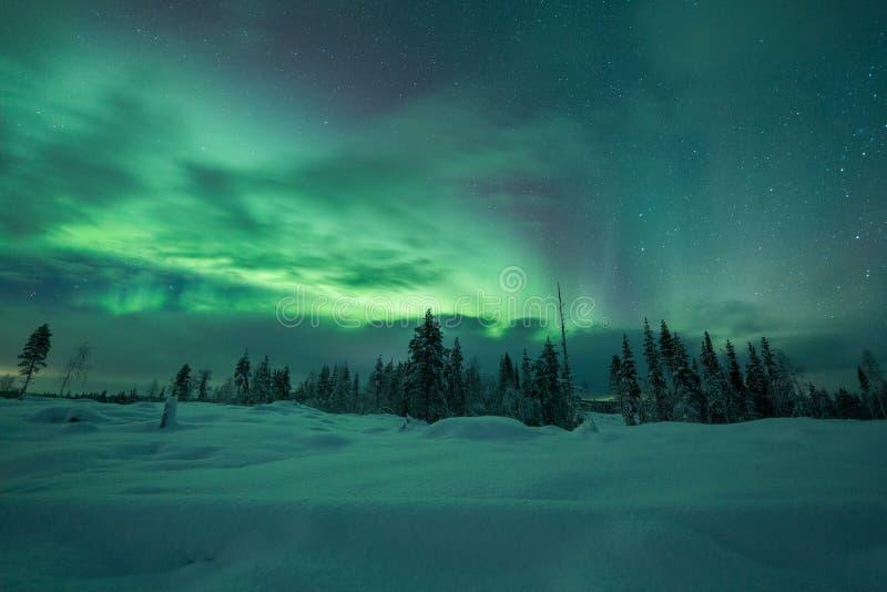 极光borealis (北极光)在芬兰,拉普兰森林 图库摄影