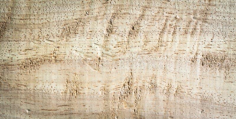 极大的纹理结构树木头 免版税库存照片