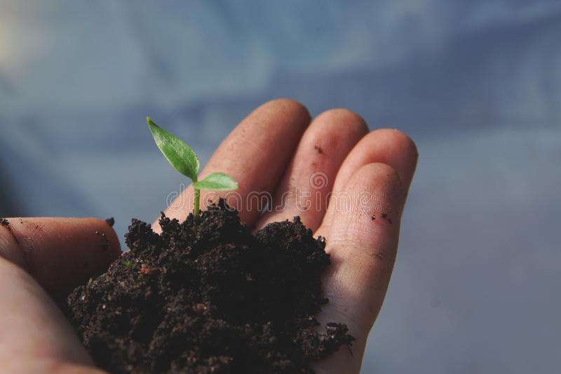 极少数地球和小绿色植物在手中棕榈的反对天空 库存图片