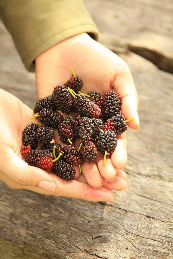极少数莓果 免版税库存图片