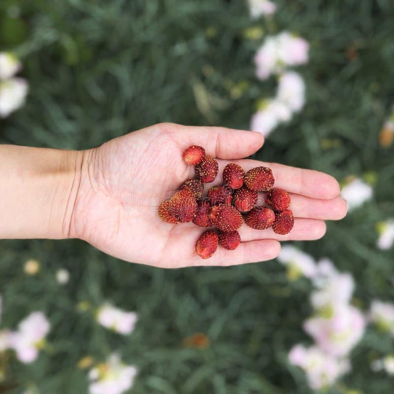 极少数野草莓顶视图 免版税图库摄影