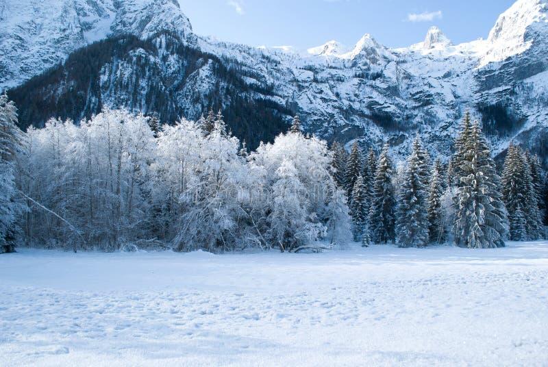 极性冰的一个早晨在山下的森林里 库存图片