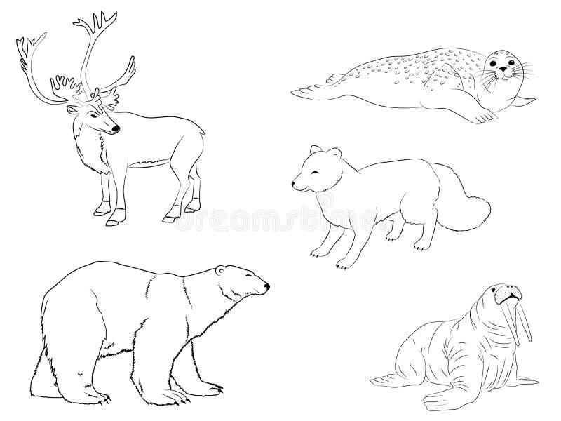 极性北极动物 驯鹿、海小牛、白熊、海象和狐狸的概述汇集 向量例证
