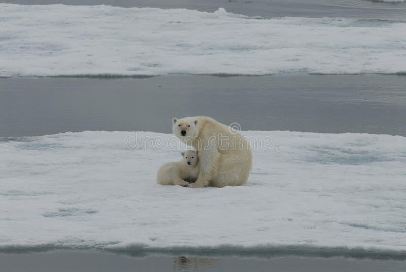 极性的小熊