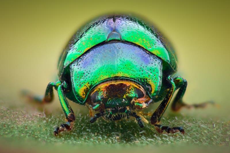 极端放大-绿色珠宝甲虫 免版税库存照片