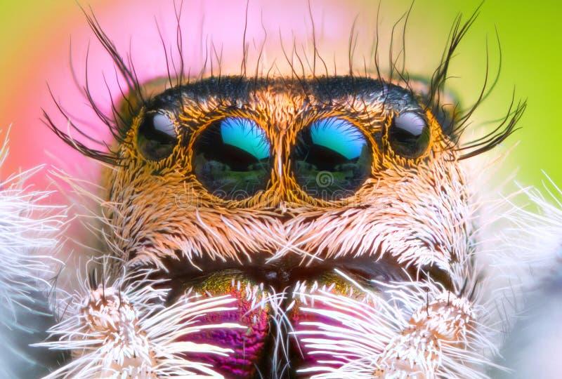 极端被扩大化的跳跃的蜘蛛头和眼睛正面图有绿色叶子背景 免版税库存照片