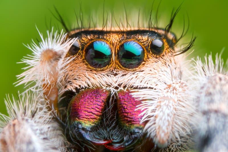 极端被扩大化的跳跃的蜘蛛头和眼睛正面图有绿色叶子背景 免版税库存图片