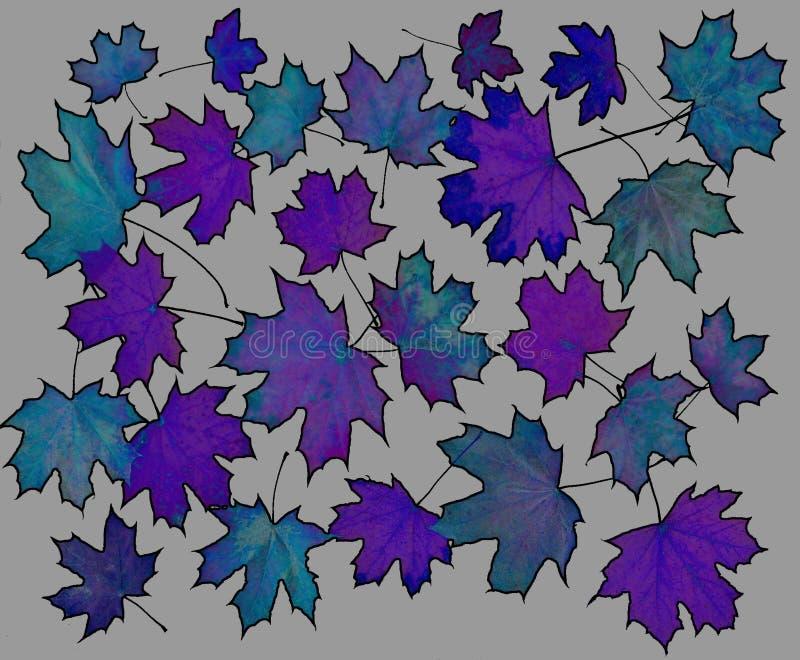 构成生叶槭树 图库摄影