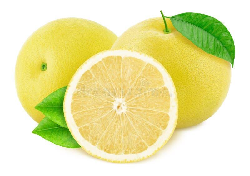 构成用在白色背景隔绝的白色葡萄柚 库存照片