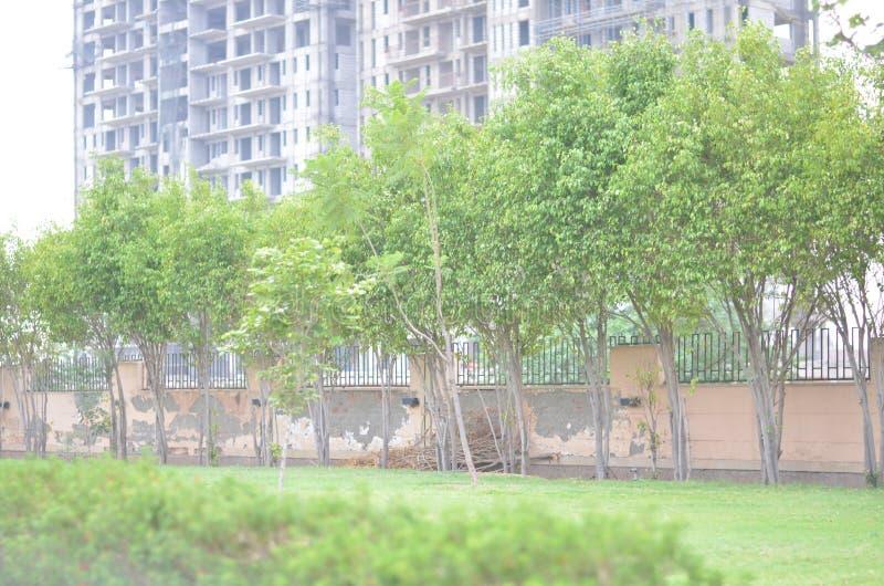 结构树和大厦 库存照片