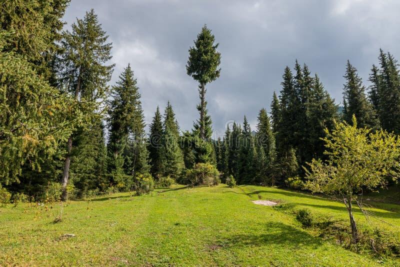 结构树和草甸 免版税库存照片