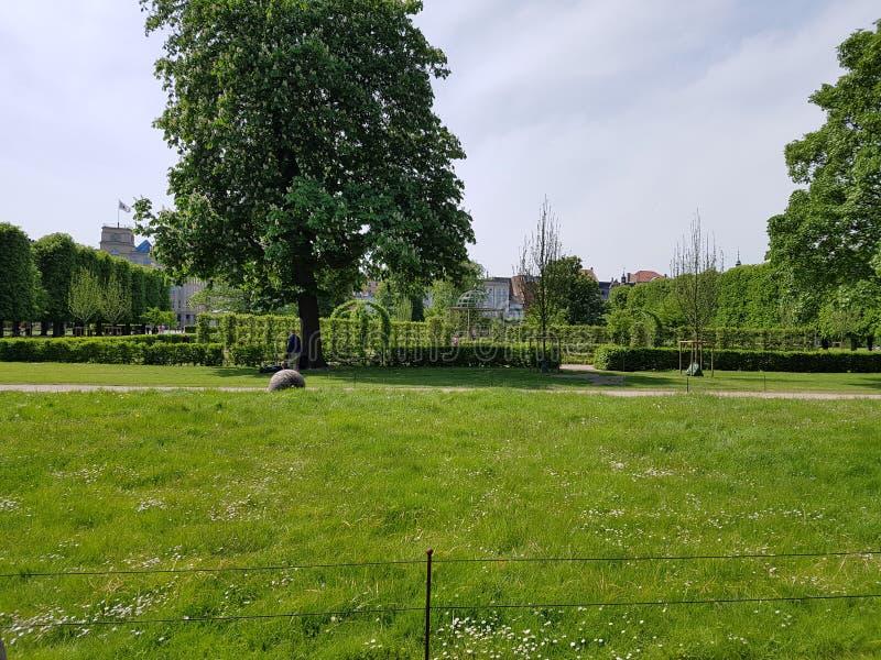 结构树和草 免版税库存图片