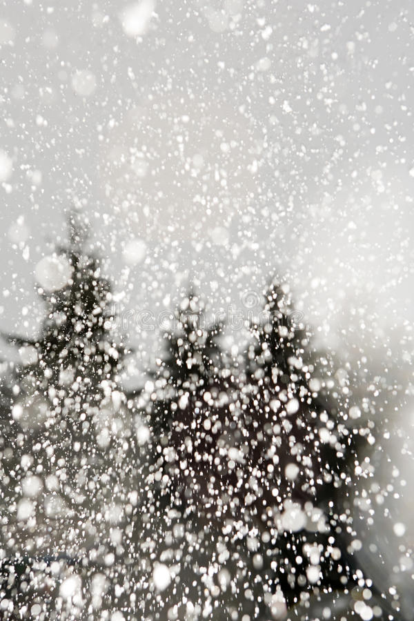 Download 结构树和雪 库存照片. 图片 包括有 欢乐, 降雪, 加拿大, 吸引力, 本质, 冷颤, 冻结, 节假日 - 62533816