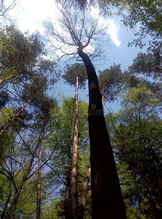 结构树在公园 图库摄影