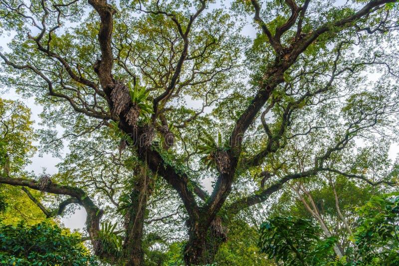结构树在公园 免版税库存照片