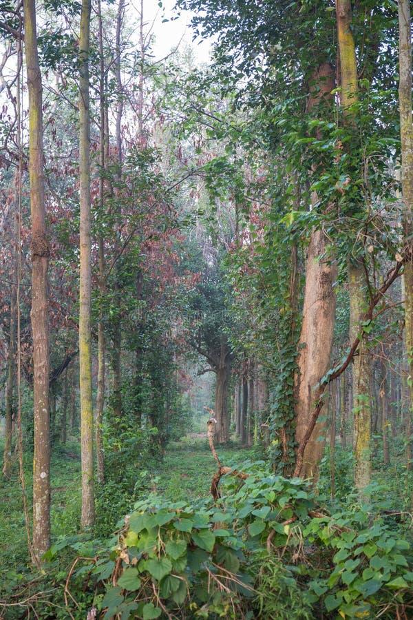 结构树在森林里 库存照片