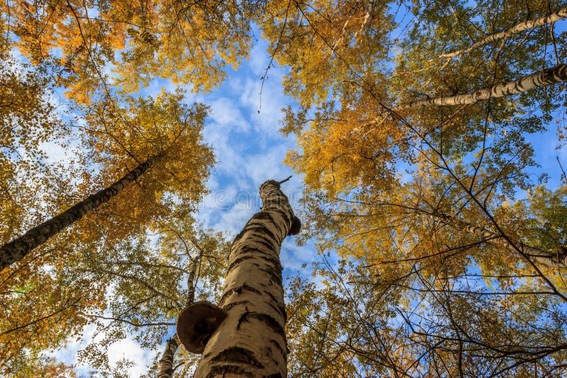 结构树在秋天 免版税图库摄影