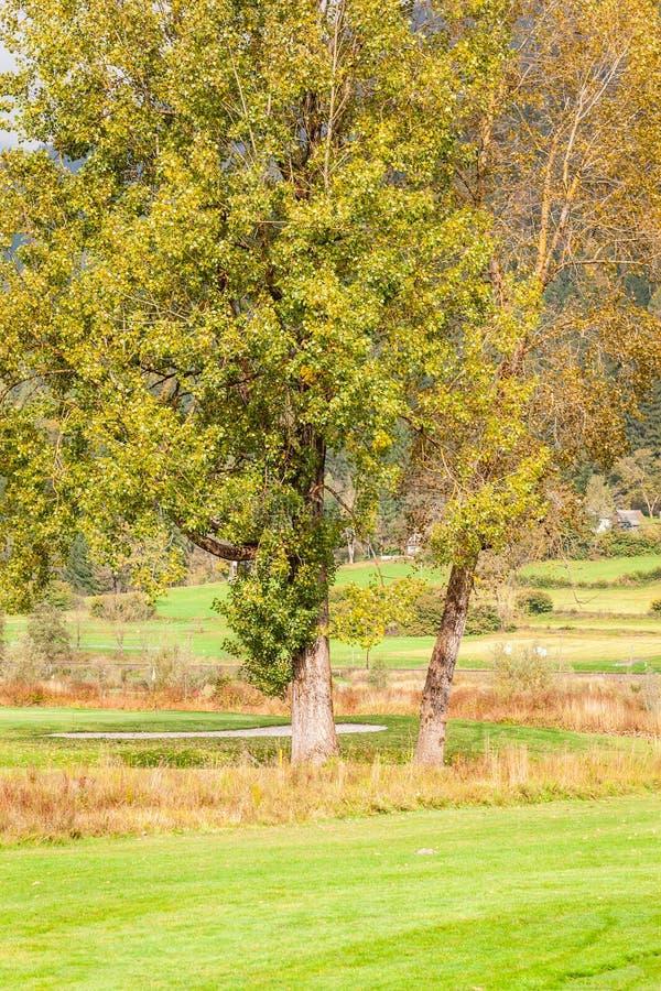 Download 结构树在草甸 库存图片. 图片 包括有 农村, 叶子, 本质, 孤独, 没人, 室外, 环境, 乡下, 自治权 - 62530163