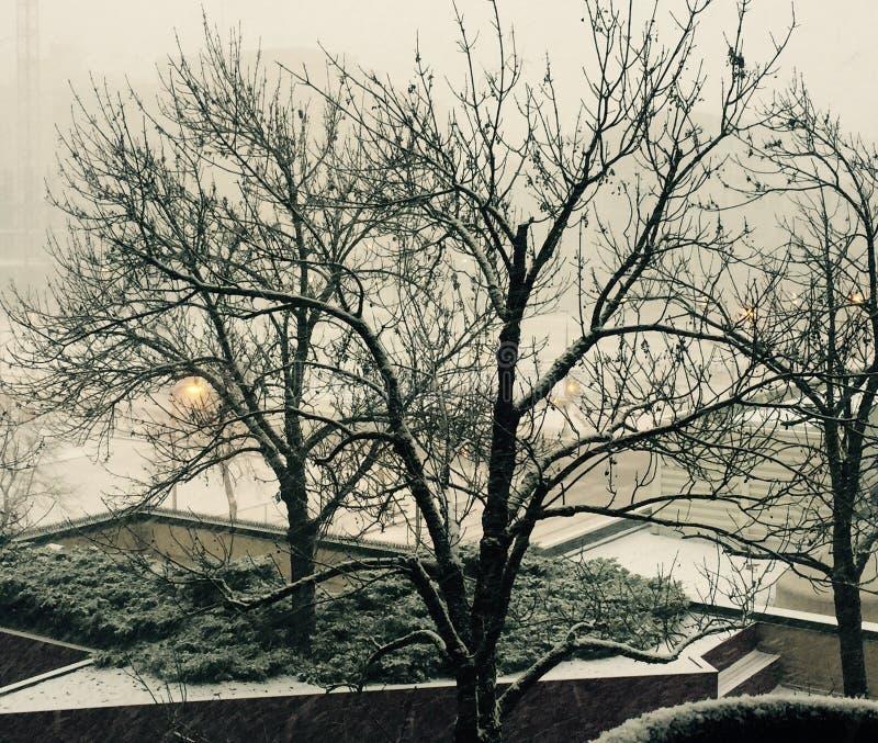 结构树白色冬天 免版税库存图片