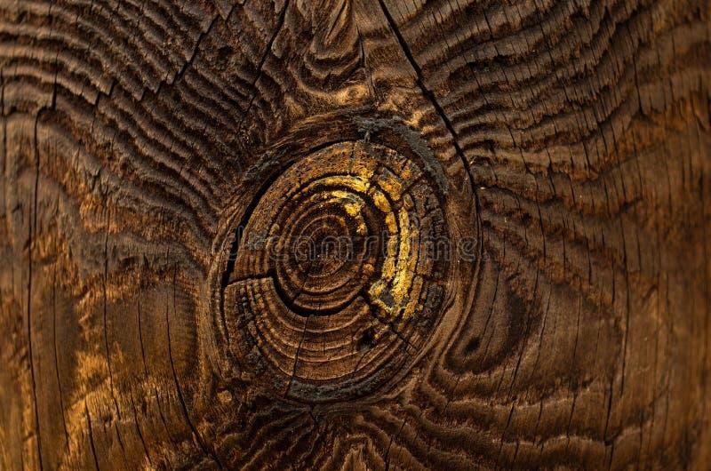 结构树的纹理 库存图片
