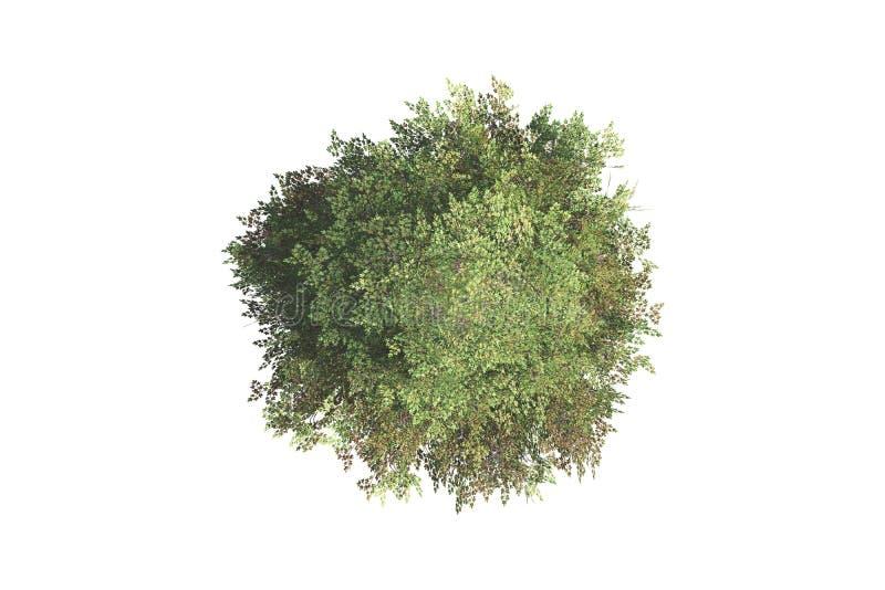 结构树顶视图 免版税库存照片