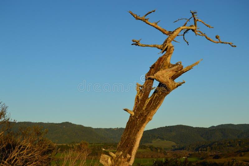 结构树风化了 免版税库存照片